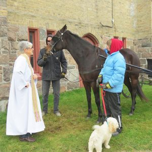 Animal blessed at the annual service